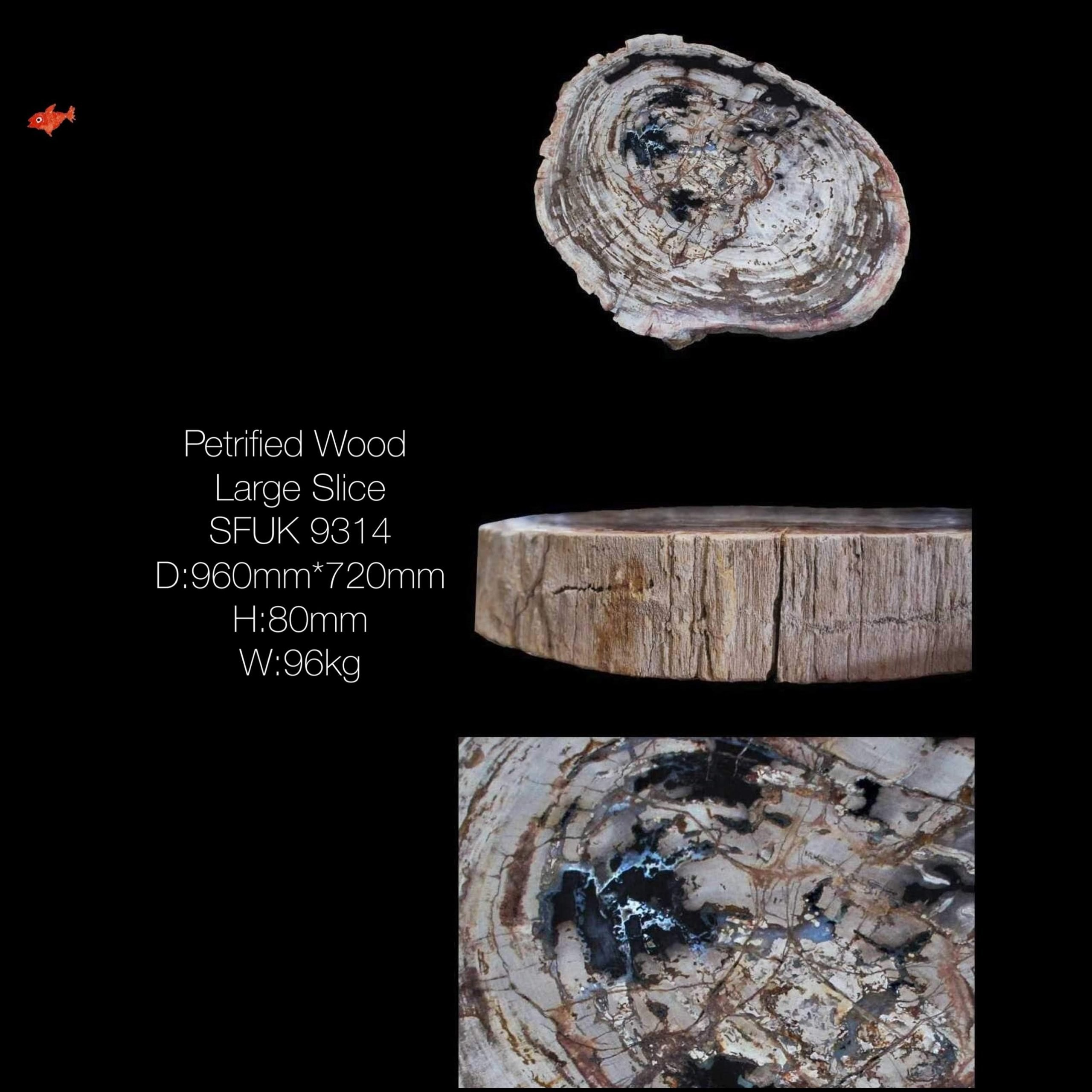 Petrified Wood Large Slice Table Top